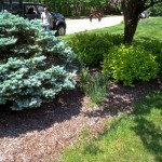 Kelly's Landscaping Before Mulching and Pruning